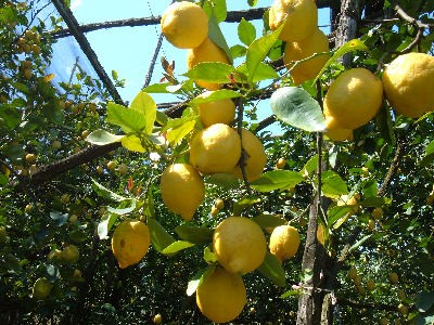 limoneto.jpg