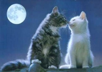 gatti e amore.jpg